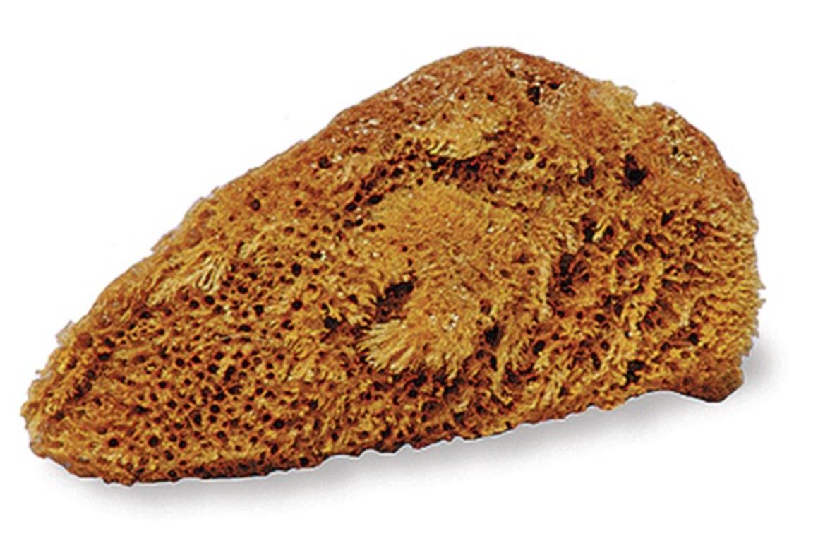 Natural Tack Sponge
