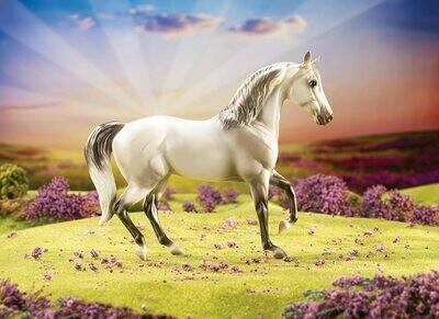 Mariah - 2013 Classics Horse of the Year