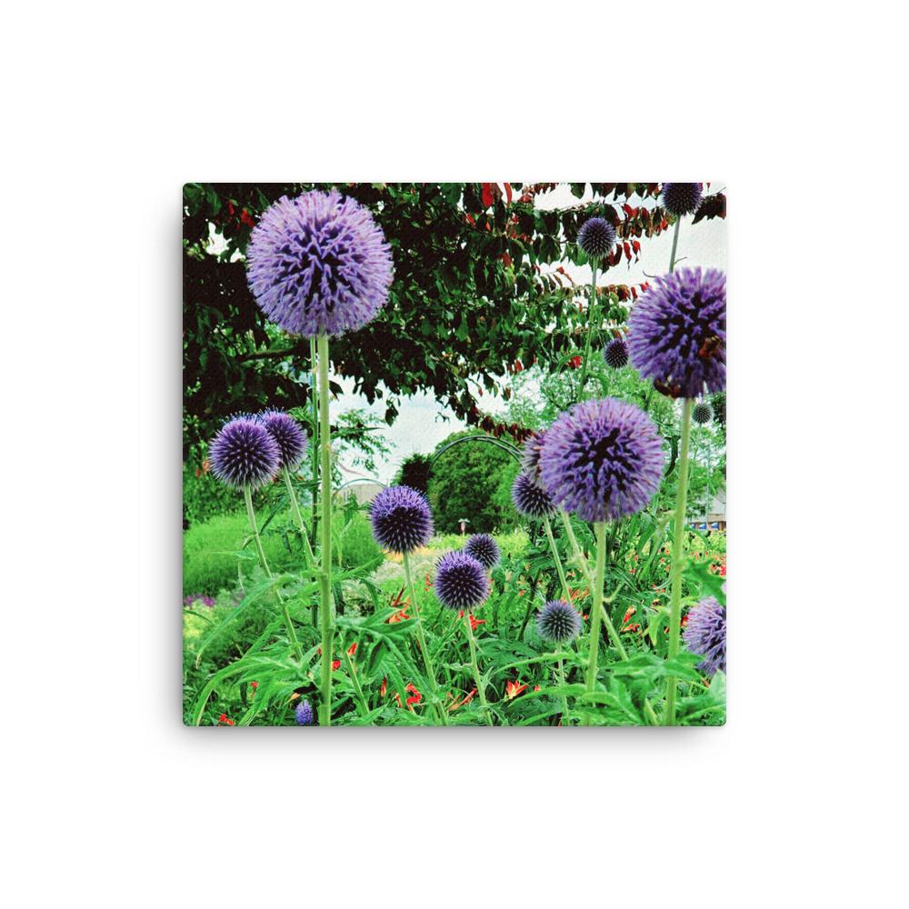 """Ornamental Onion"" Purple Allium Floral Photography Print"