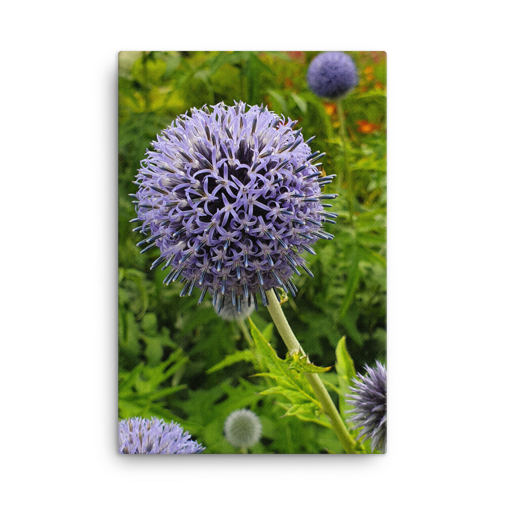 """Jewelled Purple Flower"" Allium Flower Photography Print"