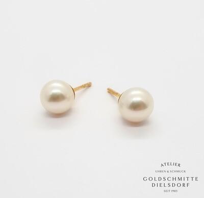 Perlohrstecker Akoya - Perlen Gelbgold 750