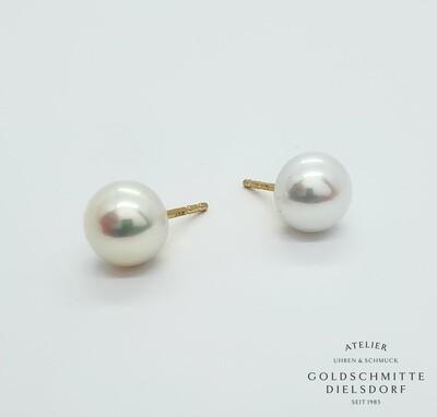 Perlohrstecker Süsswasser - Perlen Gelbgold 750