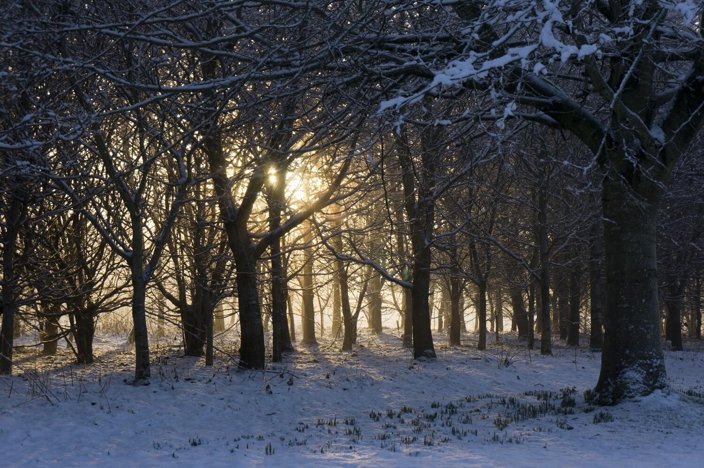 Winter Sunlight Mounted Print