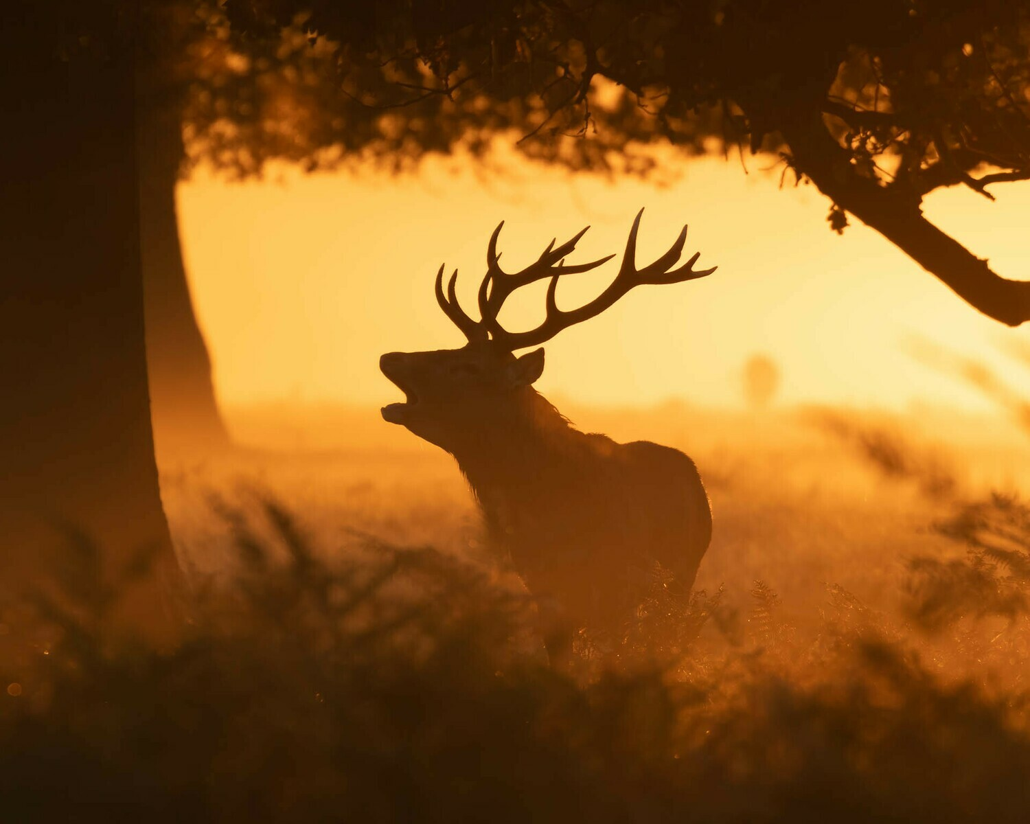 Red Deer stag, silhouette