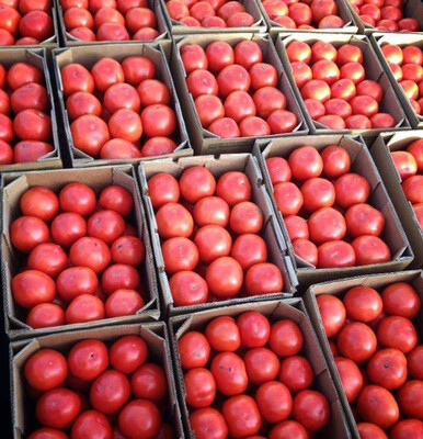 Tomatoes 25 LB Case