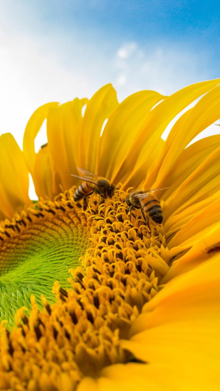 Bee Pollen LOCAL