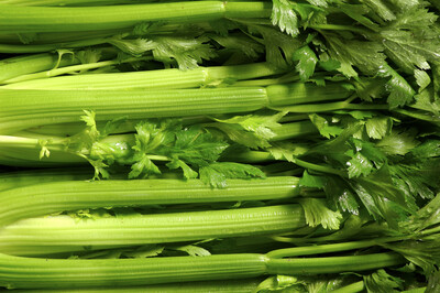 Celery ORGANIC