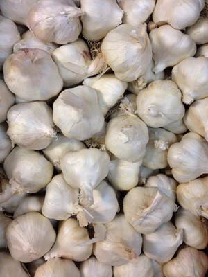 Garlic Whole USA