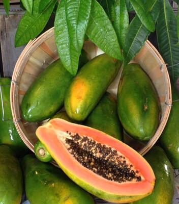 Papaya Large Red