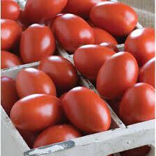 Tomato Vine Ripe Roma/Plum GEORGIA