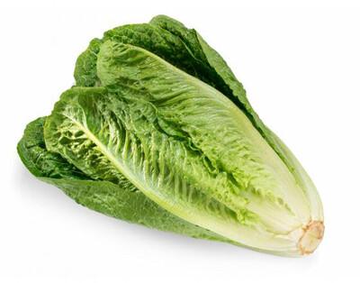 Lettuce Romaine ORGANIC