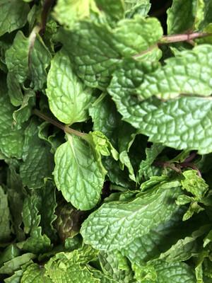 Herb Mint
