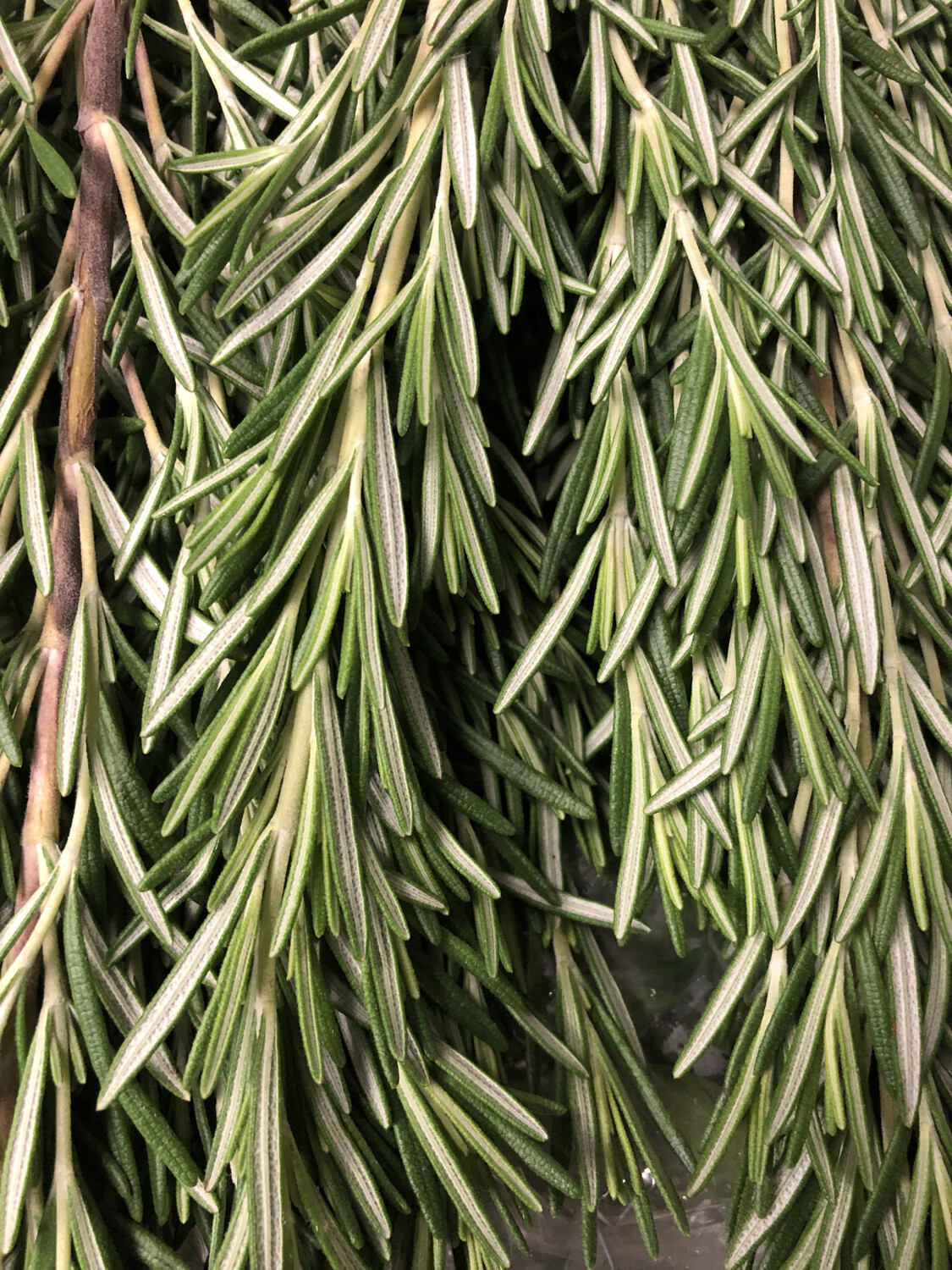 Herb Rosemary LOCAL