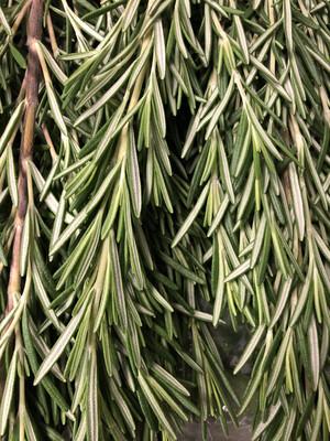 Herb Rosemary LOCAL