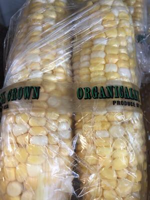 Corn Sweet Shucked 2 pack ORGANIC