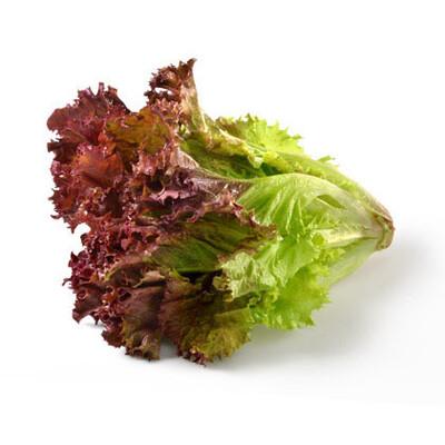 Lettuce Red Leaf ORGANIC