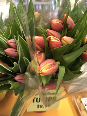 Tulips Asst. Colors