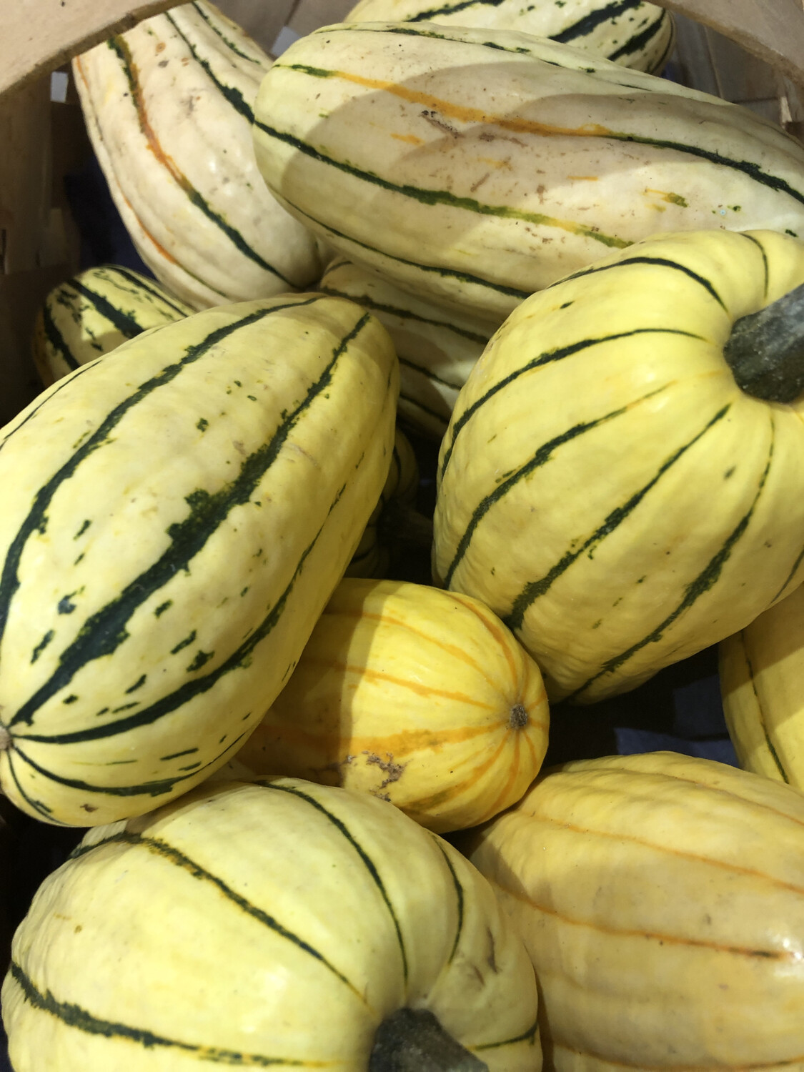 "Squash Hard Delicata /lb. ""Sweet Potato""  LOCAL"