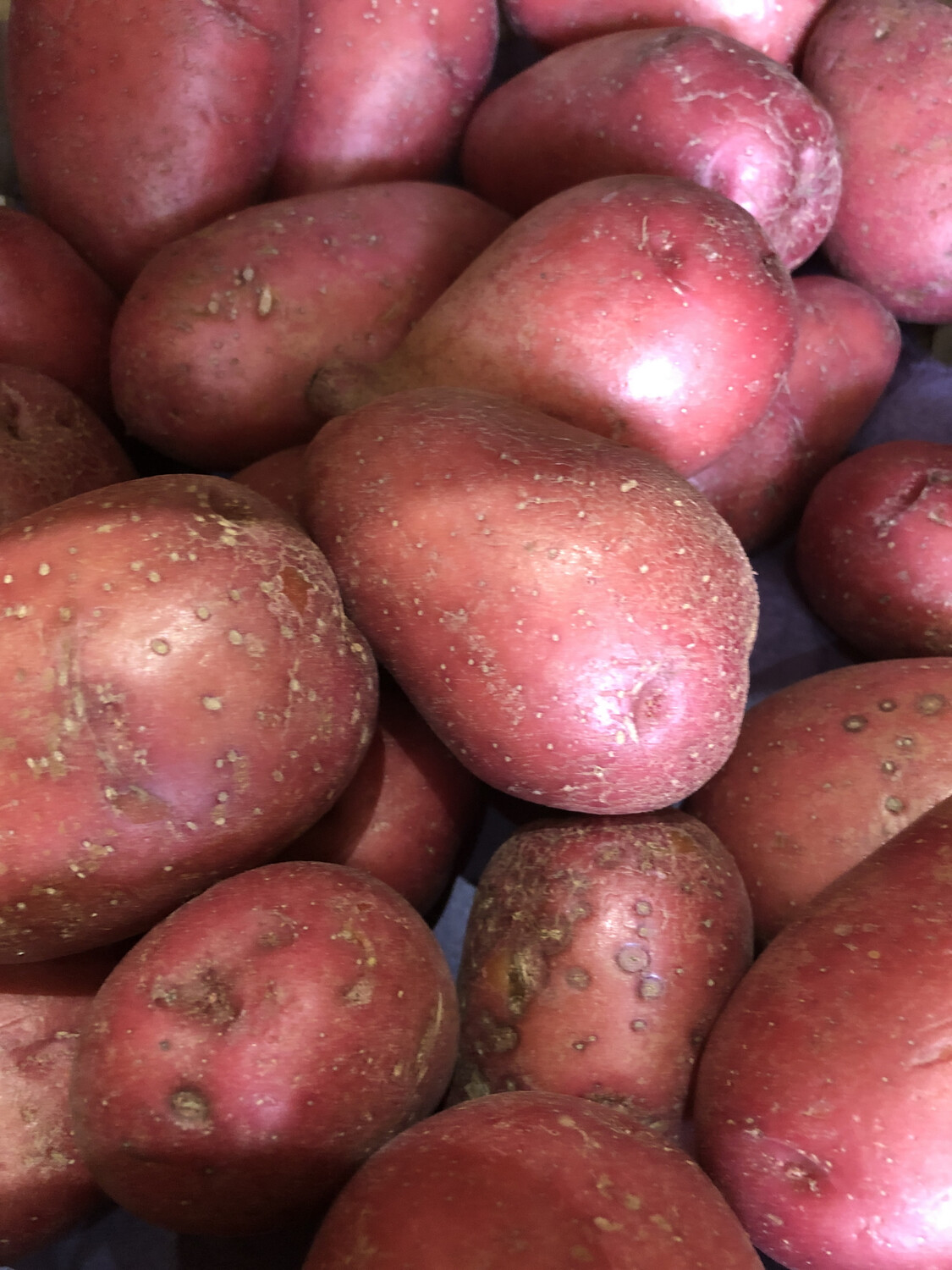Potato Red /lb. ORGANIC