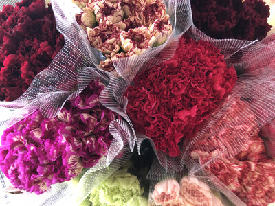 Carnation Mini Assorted
