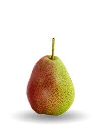 Pear Forelle Fresh Crop USA