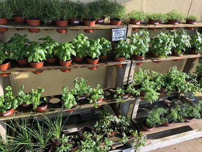 Herb & Veggie Plant 4.33