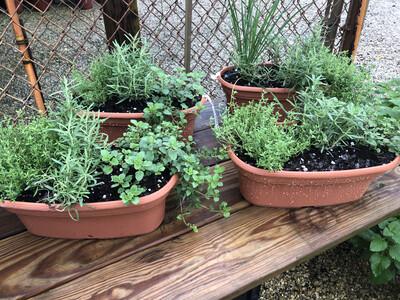 Herb Window Planter 9