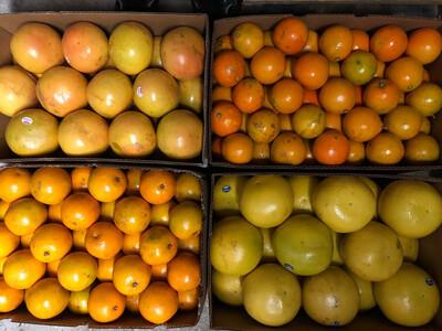Orange Temple 64ct FLORIDA