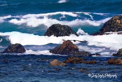 Mooloolaba Sea Eagle