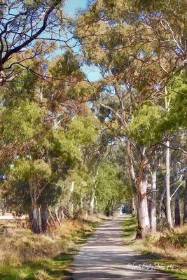 Gum Trees on a Country Road