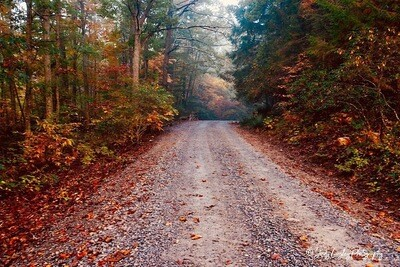 Autumn Country Road 1