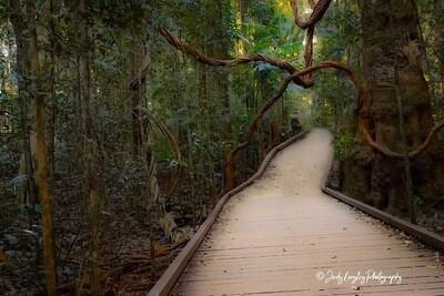 Mary Cairncross Walkway