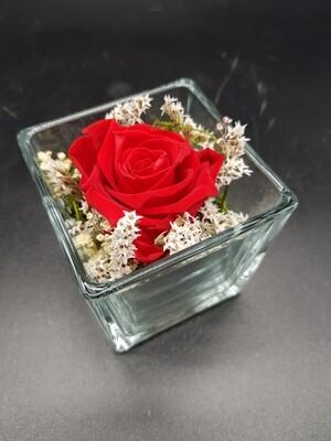 stabilisierte Rose im Glas (eckig / Blüte rot)