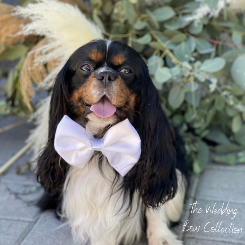Pets Ribbons White Wedding Bow on velcro