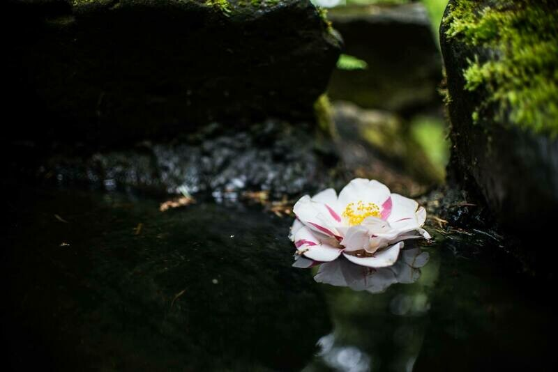 Floating Flower, 11X14