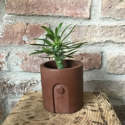 Marble Pot & Plant Maroon Brown (plant included!)