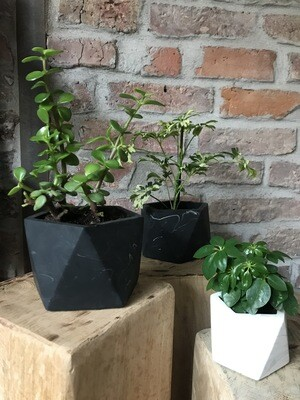 Marble Pot & Plant Mare - Black Marble