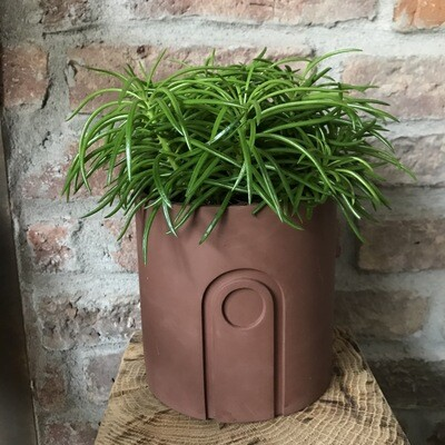 Marble Pot & Plant Maroon Brown (plant included)