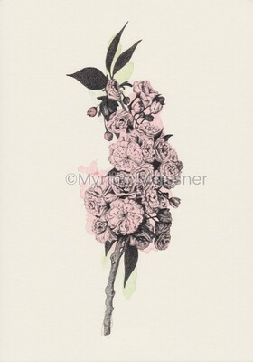 formenvielfalt | Art Print Cherry Blossom (colour & black-white - A5 & A4)