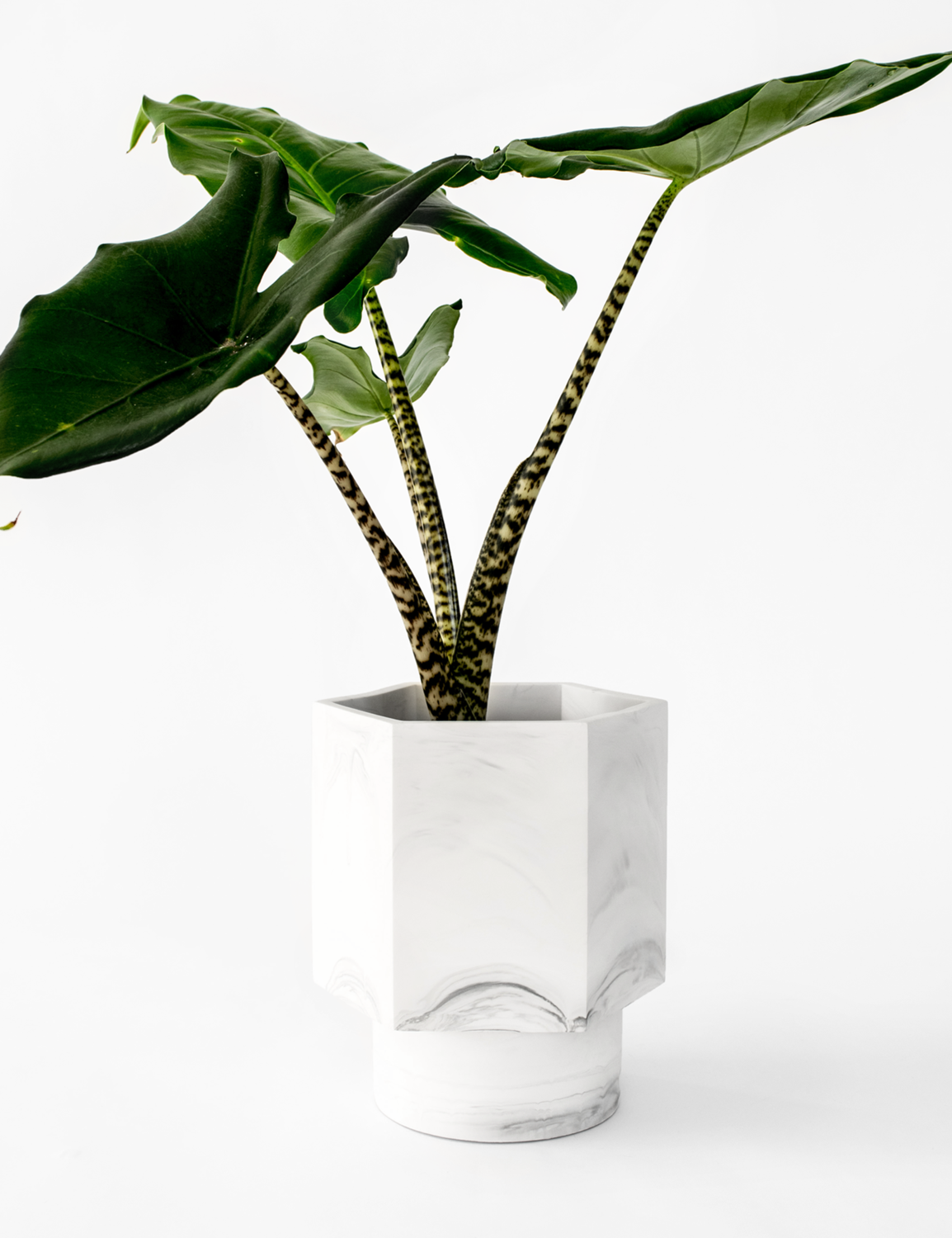 House Raccoon | Self Watering Pot - White Marble