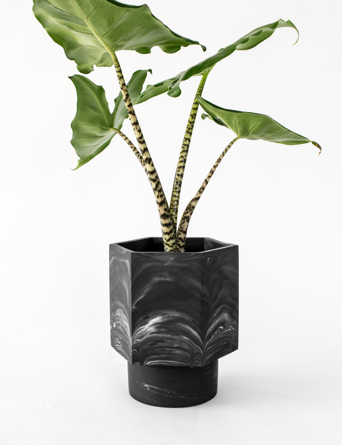 House Raccoon | Self Watering Pot - Black Marble