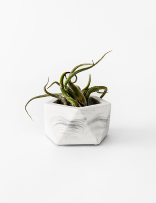 House Raccoon | Vand Tealight/ Airplant holder - White Marble