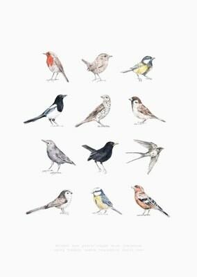 Inkylines | Birds Poster A4