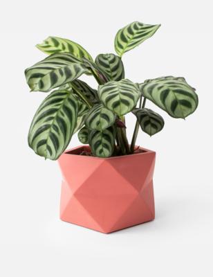 Palua Plant Pot Large -Pomegranate (plant not included)