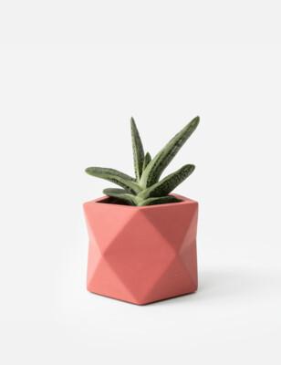 Palua Plant Pot Medium - Pomegranate (plant not included)