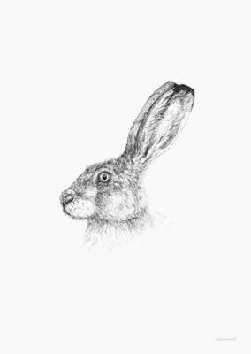 Inkylines | European Hare - A6 (postcard) with or without wooden frame