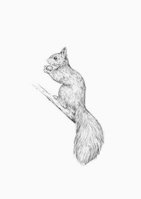 Inkylines | Squirrel - A6 postcard with or without wooden frame