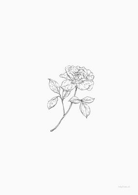 Inkylines | Garden Rose - A6 (postcard) with or without wooden frame