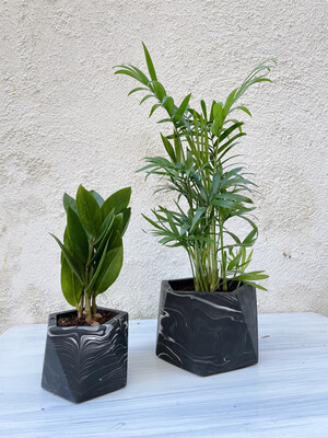 House Raccoon | Black marble pot with plant zamioculcas zamiifolia - 6cm (plant included!)