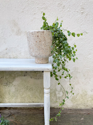 Kinta | Vase on foot cap with plant - upcycled paper & wood pulp (ficus pumila plant included!)